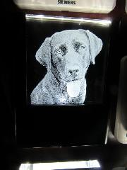 Retriever Night Light