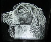Spaniel Night Light